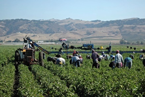 A bunch of workers walking down the farm field