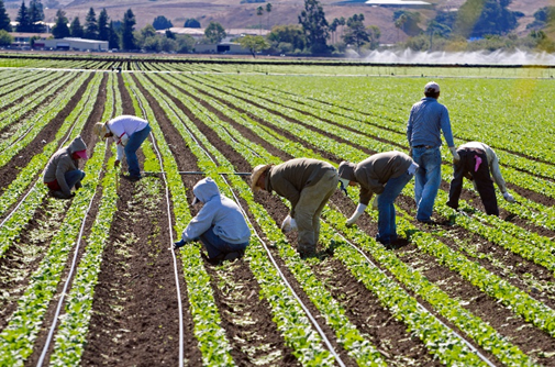 A bunch of workers sitting in rowsin the farm field